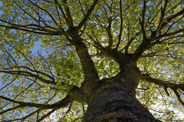 Photograph - Reach For The Sky by Kuni Photography