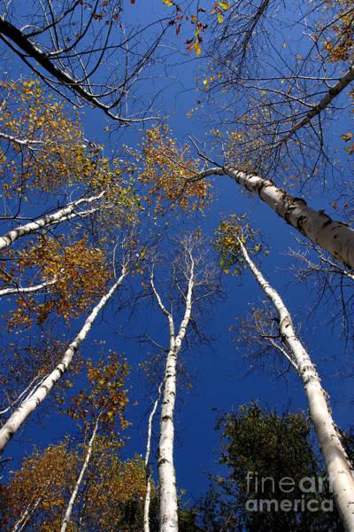 Photograph - Reach For The Sky by Steve Augustin