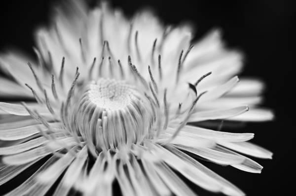 Reaching Photograph - Reach by Matthew Blum