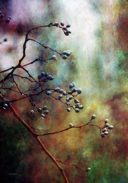 Photograph - Reaching 7921 Idp_2 by Steven Ward