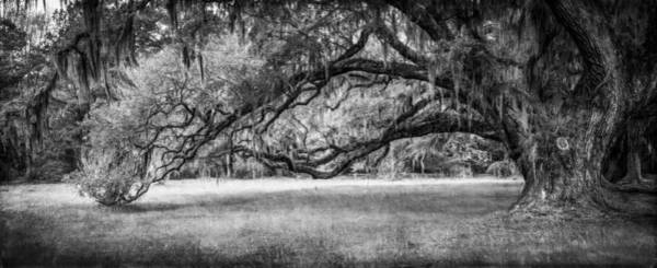 Photograph - Reaching-bw by Joye Ardyn Durham