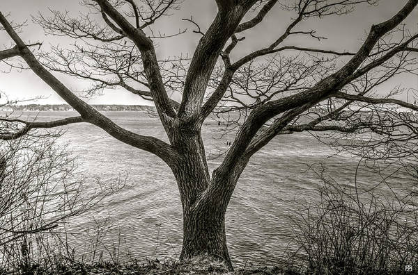 Photograph - Reaching For Casco Bay by John Meader
