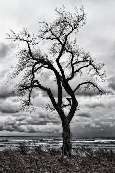 Great Lakes Region Wall Art - Photograph - Reaching For The Clouds by Phill Doherty