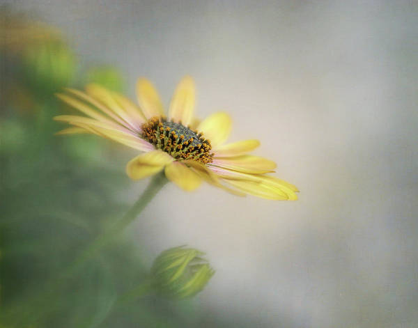 Wall Art - Photograph - Reaching For The Sun by David and Carol Kelly