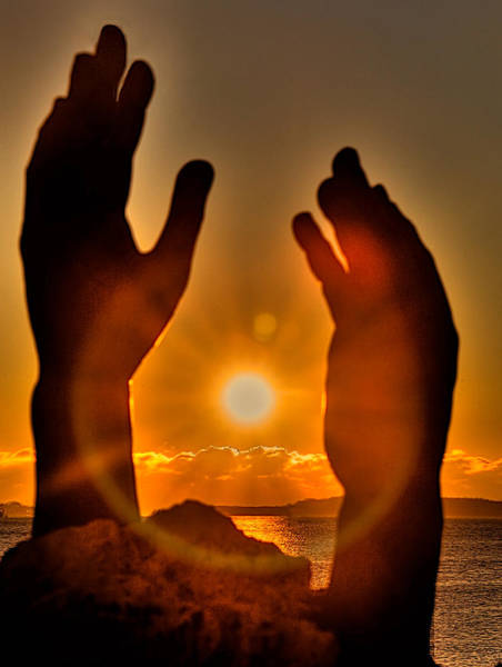Wall Art - Photograph - Reaching For The Sun by William Wetmore