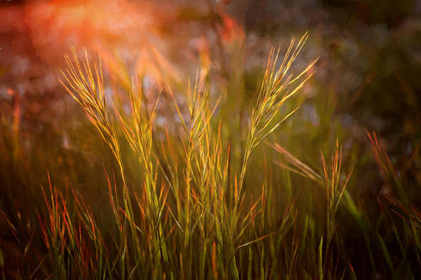 Photograph - Reaching For The Sunset by Mary Jo Allen