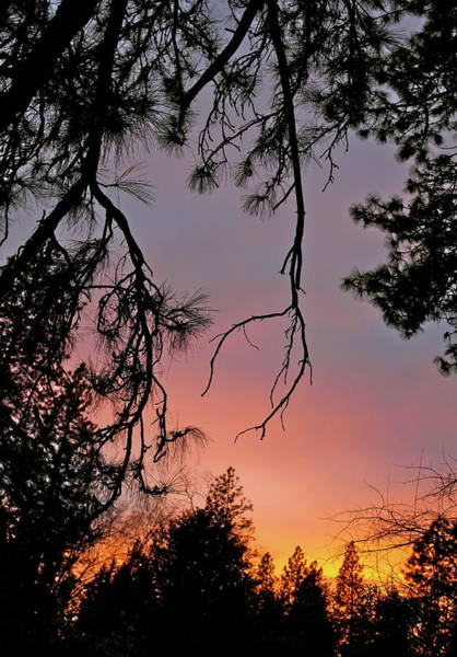 Photograph - Reaching For The Sunset by Michele Myers
