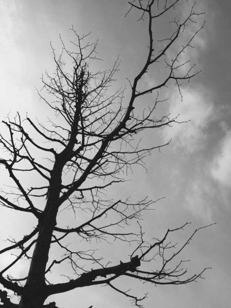 Branch Photograph - Reaching Out by Linda Woods