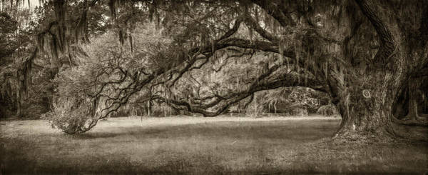 Photograph - Reaching-sepia by Joye Ardyn Durham