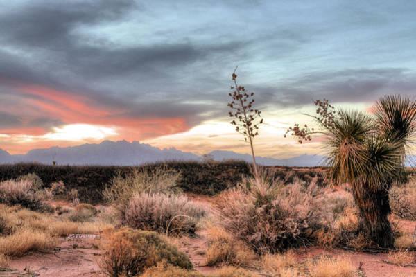 Photograph - Reaching Skyward by JC Findley