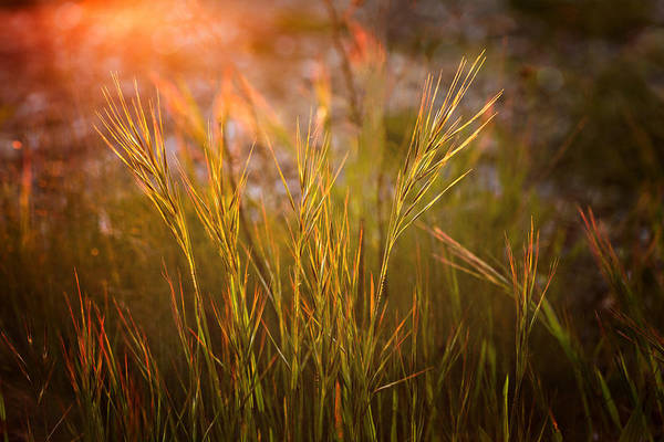 Photograph - Reaching The Sunset by Mary Jo Allen