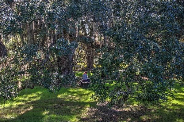 Photograph - Reading In The Shade Of Live Oaks by Dimitry Papkov