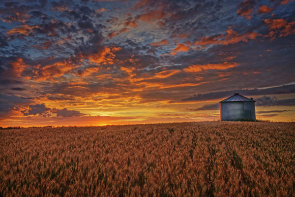 Photograph - Ready For Harvest by Dan Jurak