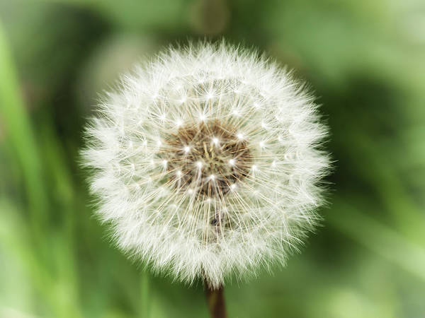 Photograph - Ready For Wishes by Nick Bywater