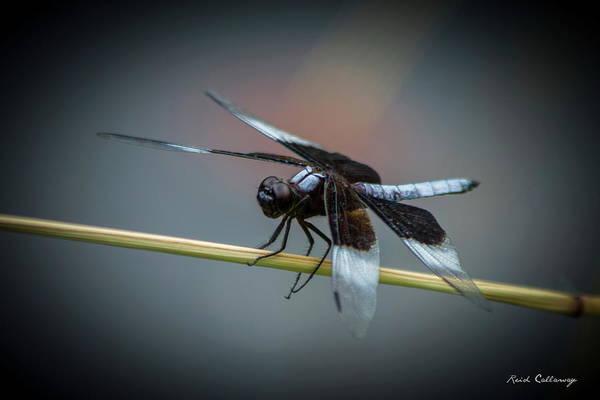 Photograph - Ready Set Go Dragonfly Art by Reid Callaway