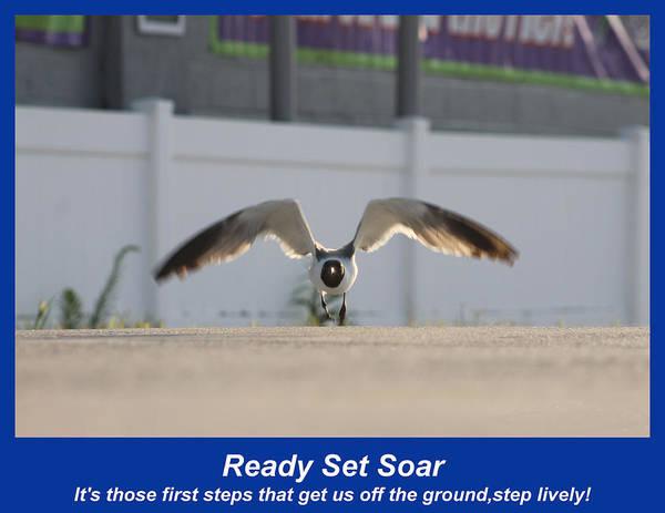 Photograph - Ready Set Soar by Robert Banach