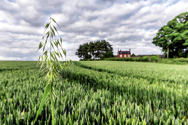 Photograph - Ready To Harvest by Nick Bywater