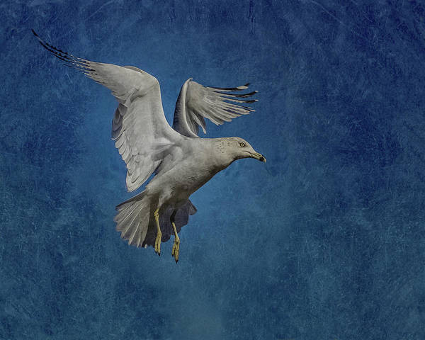 Shore Bird Digital Art - Ready To Land by Ernie Echols