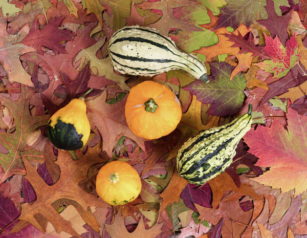 Cucurbitaceous Photograph - Real Autumn Gourd Decorations On Leaf Background  by Thomas Baker
