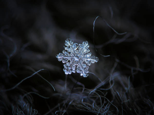 Photograph - Real Snowflake - 2017-12-07 1 by Alexey Kljatov