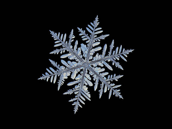 Photograph - Real Snowflake - Silverware Black by Alexey Kljatov