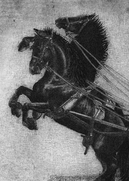 Graphite Drawing - Rearing Horses by Eric Fan