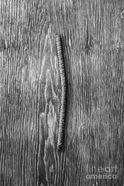 Wall Art - Photograph - Rebar On Wood Bw by YoPedro