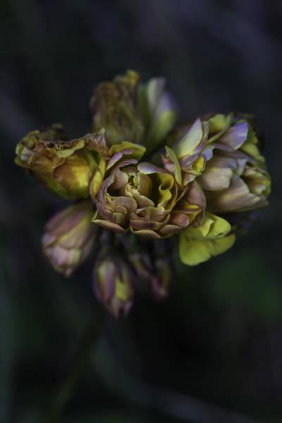 Photograph - Reborn by Edgar Laureano
