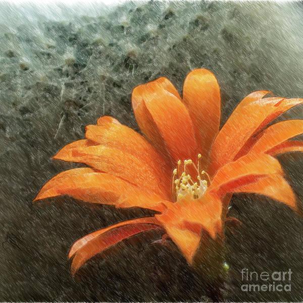 Wall Art - Photograph - Rebutia Muscula Bright Orange Flower by Heiko Koehrer-Wagner