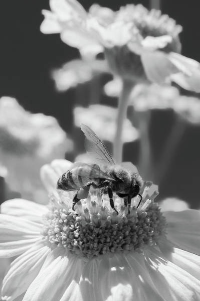 Photograph - Recharge Black And White by Scott Campbell
