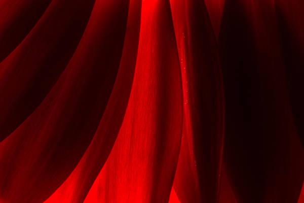 Red Abstract Of Chrysanthemum Wildflower Art Print
