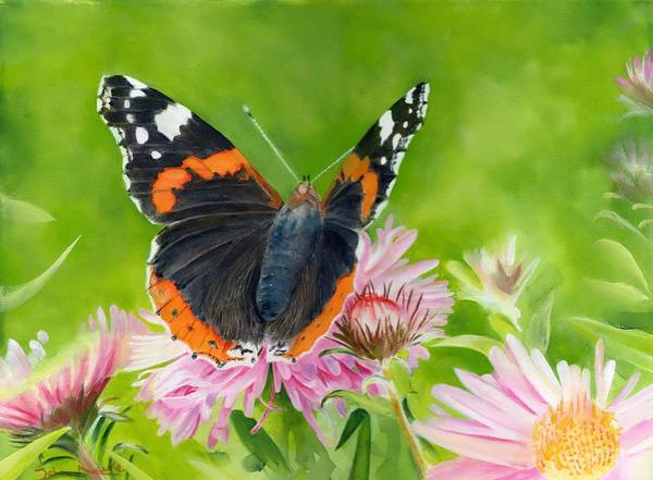 Painting - Red Admiral by John Neeve