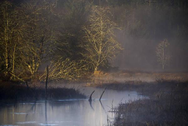 Photograph - Red Alder Along Colewort Creek by Robert Potts