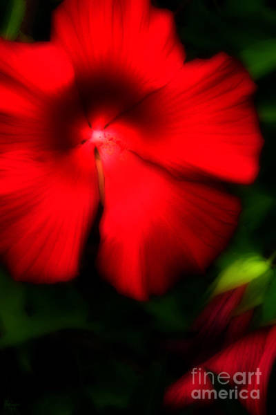 Photograph - Red Amaryllis by Jeff Breiman