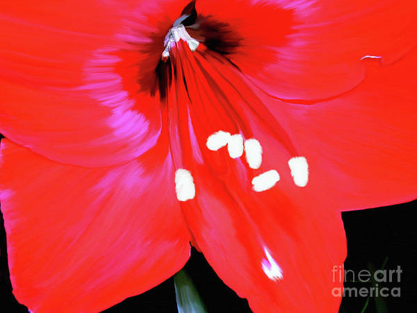 Painting - Red Amaryllis by Patricia Griffin Brett
