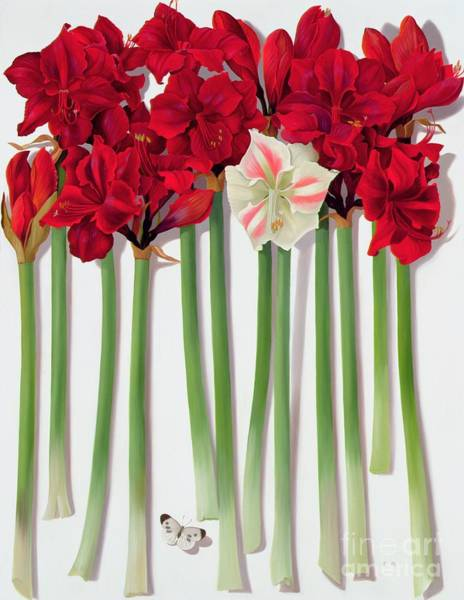 Long Shadow Painting - Red Amaryllis With Butterfly by Lizzie Riches