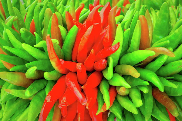 Photograph - Red And Green Chile Peppers by SR Green