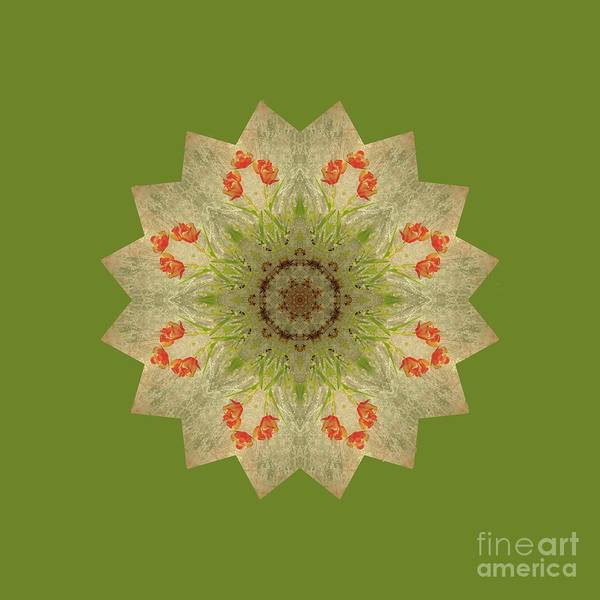 Digital Art - Red And Green by Elaine Teague
