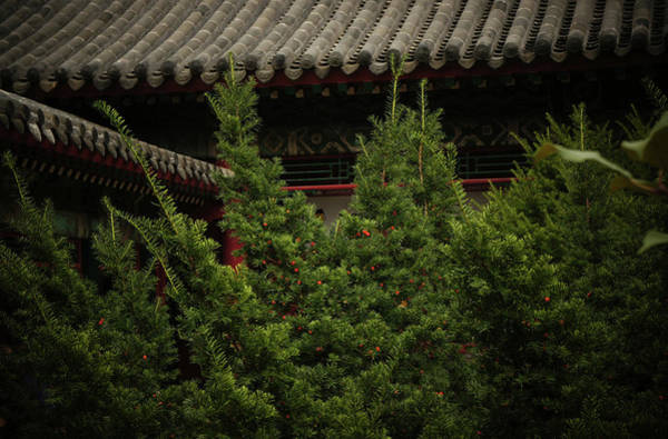 Forbidden City Photograph - Red And Green by Kestutis Kasparavicius