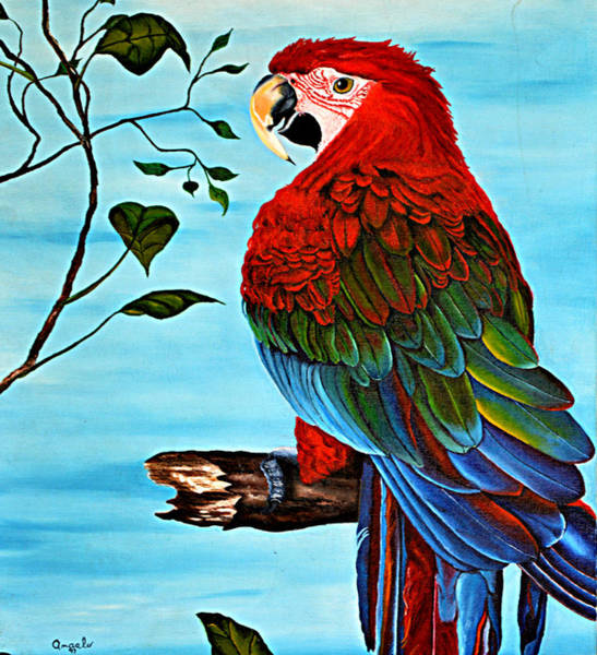 Wall Art - Painting - Red And Green Macaw by Andrew Hollimon