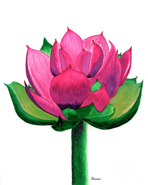 Painting - Red And Pink Lotus Floral Watercolor Painting 619 by Ricardos Creations