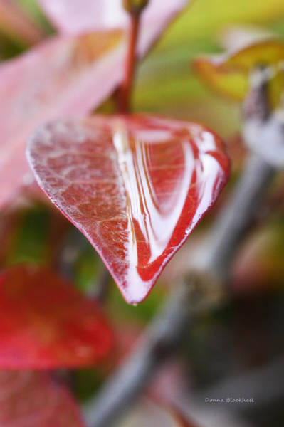 Wall Art - Photograph - Red And Wet by Donna Blackhall