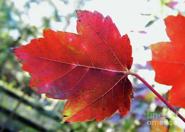 Photograph - Red And Yellow by D Hackett