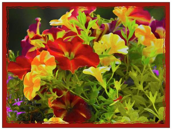Photograph - Red And Yellow Flowers by Rusty R Smith