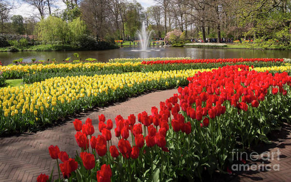Wall Art - Photograph - Red And Yellow Tulips On The River Bank In Keukenhof Gardens by Louise Heusinkveld