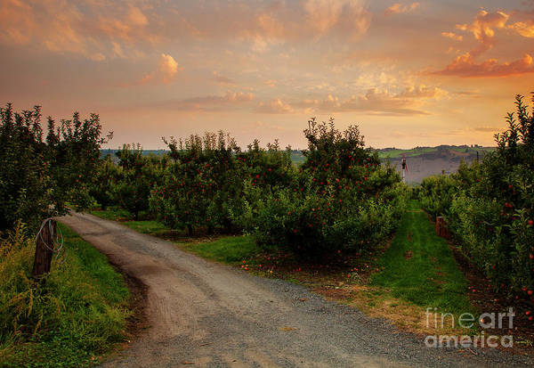 Wall Art - Photograph - Red Apple Lane by Mike Dawson
