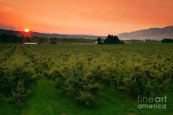 Wall Art - Photograph - Red Apple Sunburst by Mike Dawson