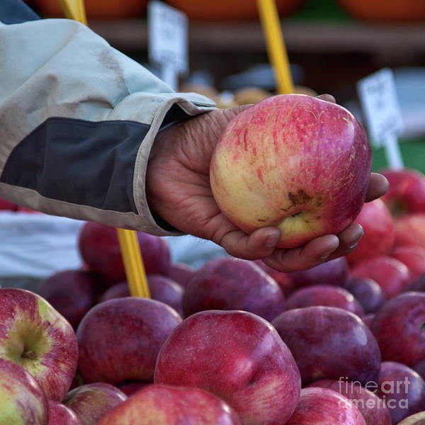 Photograph - Red Apples At Byward Market, Ottawa by Tatiana Travelways