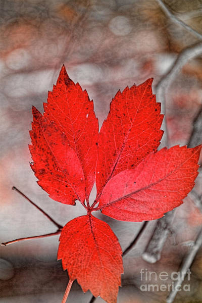 Photograph - Red Autumn by Elaine Teague