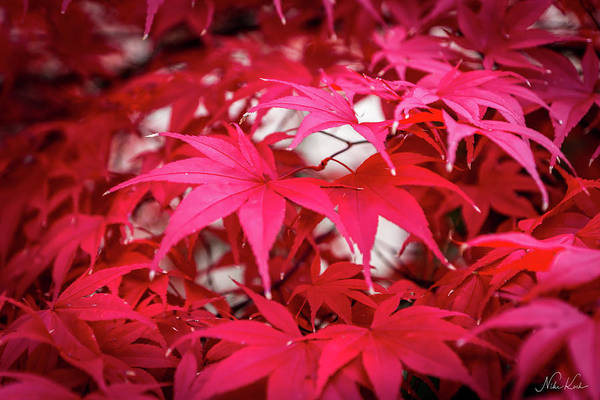 Photograph - Red Autumn by Framing Places